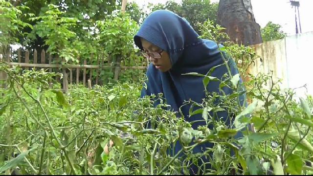 Warga Tegal menanam sendiri cabai di halaman rumah sendiri. (riz)