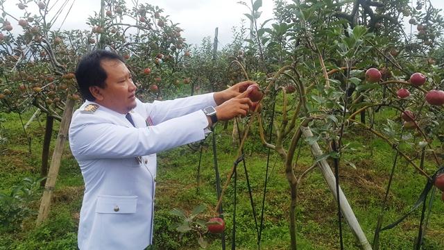 Bupati Pasuruan, Irsyad Yusuf saat petik apel di salah satu kebun Desa Blarang, Kecamatan Tutur (foto : abd)