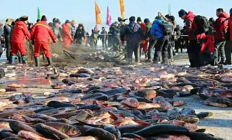 Festival Danau Jingpo merayakan panen ikan nelayan disana/ CGTN