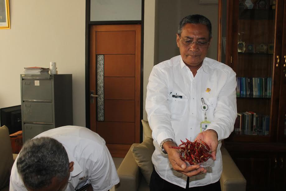 Kepala Disperindag Kabupaten Pasuruan, Edi Suwanto yang menunjukkan cabai rawit import busuk yang tersebar di pasar tradisional di Kabupaten Pasuruan (abd)
