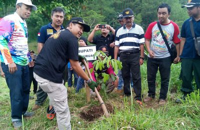 Bupati Irsyad Yusuf, saat lakukan tanam pohon di Bukit Tunggangan. (foto : abd)