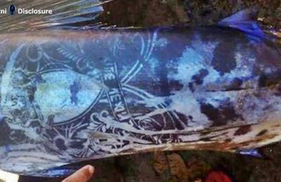 Ikan aneh dengan tubuh penuh pola tato ditemukan di Mindano