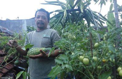 Ahmad Basri dengan hasil sayur dan buah-buahan yang ditanam di atap rumahnya. (foto: ric)