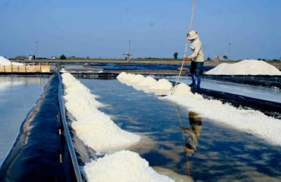 Petani garam di Desa Kalibuntu, Kecamatan Kraksaan, Kabupaten Probolinggo Jawa Timur, sedang memanen tambak garamnya, mengejar harga yang tinggi.