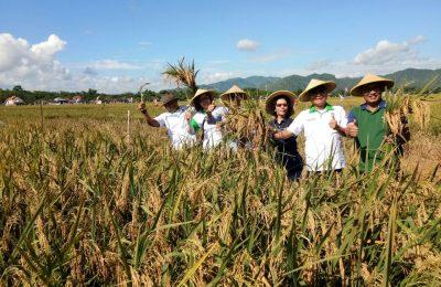 Ketua Umum HKTI Jenderal (purn)  Moeldoko didamping Bupati Tulungagung Syahri Mulyo melakukan panen perdana di sawah petani yang menanam padi dari benih M-400 di Desa Ngerendeng,  Kec.  Gondang,  Kab.  Tulungagung,  Jatim,  Sabtu (23/12)./ Tat