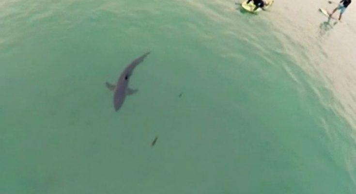 Drone dipakai untuk mengamati garis pantai Australia dari bahaya ikan hiu/ ist