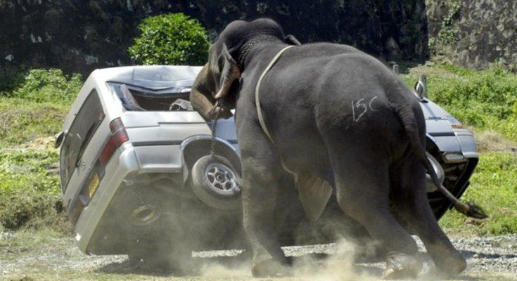 Gajah mengamuk/ ilustrasi