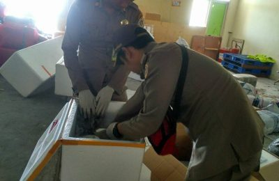 Dua kardus mencurigakan kiriman dari Jakarta ditemukan petugas Karantina Ternate Wilker Bandara Sultan Babullah, berisi paket daging babi berbahasa Korea tanpa dokumen karantina sah/ Karantina Ternate