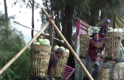 Aktivitas petani sayur kol yang bermukim di sekitar lereng Gunung Bromo.(foto: dic)