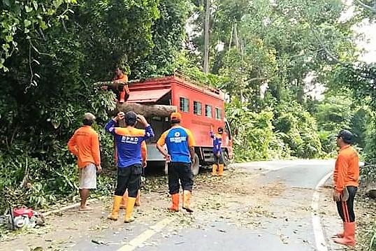 Tim BPBD dibantu Tim Satlak Pemkab Pesbar, saat membersihkan pohon tumbang yang mengganggu arus lalu lintas. (foto: gus)