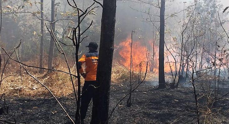 Kobaran api menghanguskan kawasan hutan jati seluas tiga hektar di Taman Nasional Baluran, Situbondo . (foto:fat)