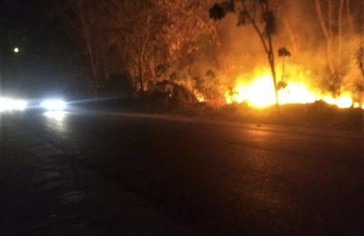 Kobaran api yang membakar kawasan hutan jati di Situbondo. (foto:fat)