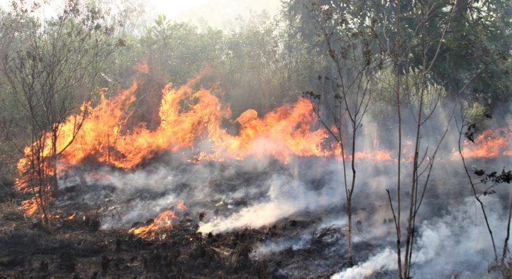 Salah satu titik api yang membakar lahan di Pontianak, Kalbar. (foto:das)