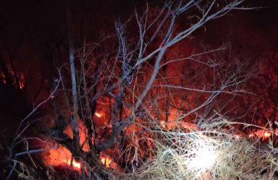 Kobaran api yang membakar kawasan hutan  di Situbondo. (foto:fat)