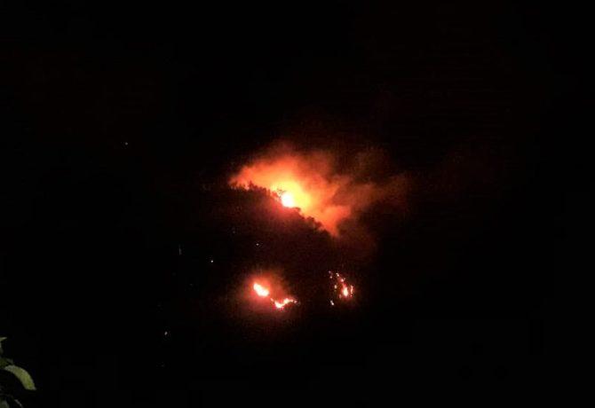 Hutan Lindung di Situbondo terbakar. (foto:fat)