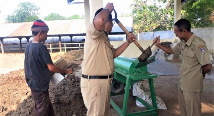 Plt Kepala Disnak Keswan Situbondo, saat ikut membuat pupuk organik. (foto:fat)