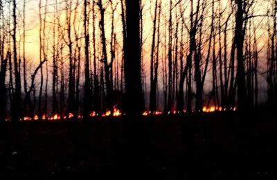 Hutan Baluran Situbondo yang terbakar. (foto:fat)