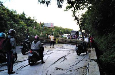 Kanit Laka Polres Situbondo, Teguh Santoso, saat cek pohon di jalur Pantura Situbondo. (Foto:fat)