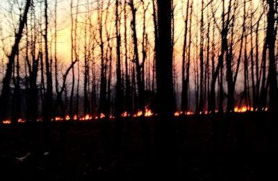 Salah satu peristiwa kebakaran hutan di Situbondo.