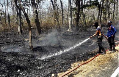 Petugas pemadam kebakaran memadamkan sisa api yang membakar kawasan hutan baluran. (foto:fat)