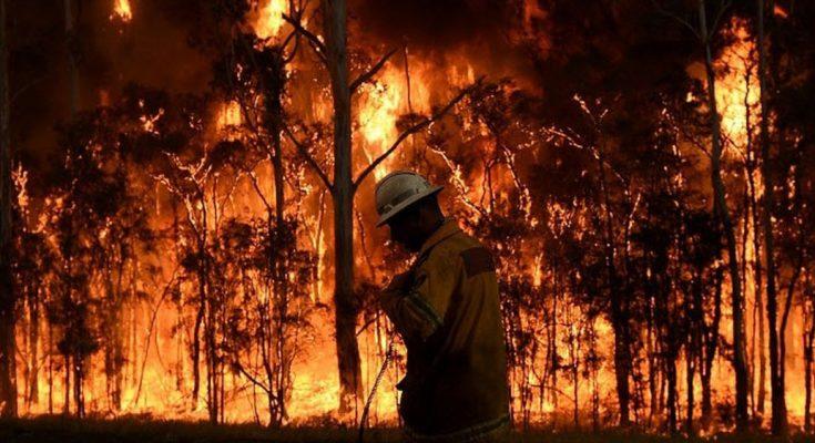 Kebakaran hutan di Australia (foto/9News)