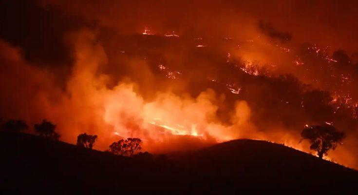 Kebakaran hutan di Australia. (foto,Ist)