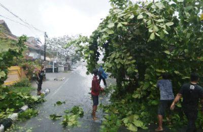 Salah satu pohomn yang tumbang akibat diterjang angin kencang di kota Pontianak. (foto:das)