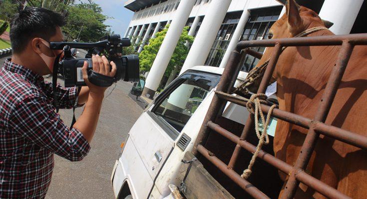 Sapi jenis Simental dengan berat 1,2 ton tersebut dibeli Jokowi seharga Rp 75 juta